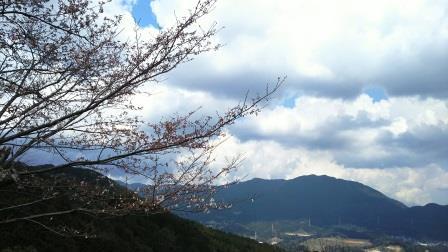 宝満山系と桜。三分咲きです。