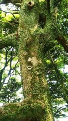 城山の木の妖精?