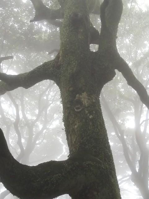 城山山頂にいる、木の妖精(笑)