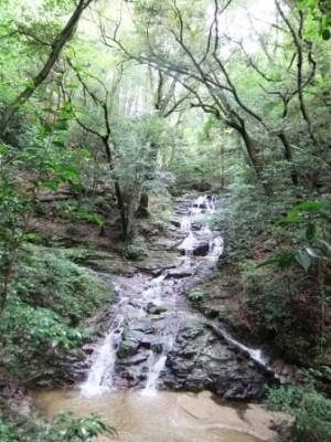 マイナスイオン水の森