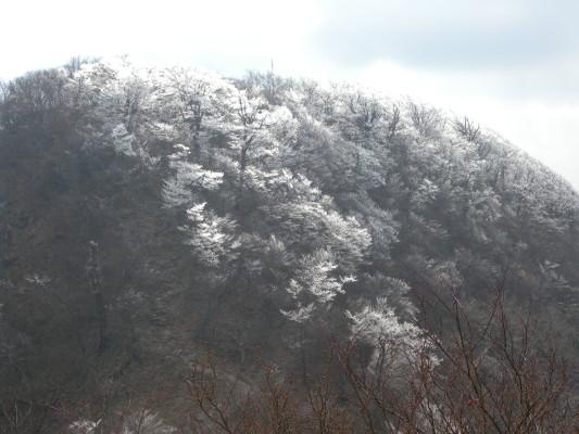 南岳の霧氷